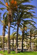 Palm trees at Cannes in France Stock Photos
