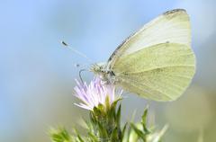 Butterfly feeding on flower - stock photo