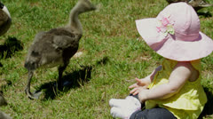 Baby infant girl with baby geese 3 Stock Footage