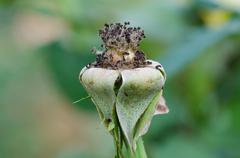 Dry pollen roses on tree Stock Photos