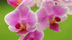Orchid detail - stock footage