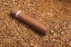 one cuban cigar ,disposit of the tobacco - stock photo