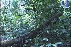 Amazon forest Acre Brazil Stock Footage