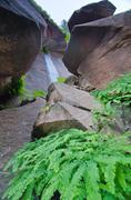 weeping rocks at zion national park, utah - stock photo