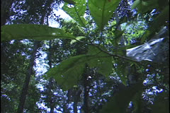 Amazon forest Stock Footage
