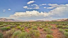 desert scrubland - stock photo
