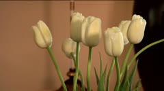 Flowers 01-pond 5 720 Stock Footage