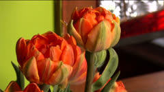 Flowers 04-pond 5 720 Stock Footage