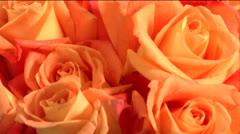 flowers 02-pond 5 720 - stock footage