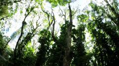 Rainforest covered in rich vegetation, Hawaiian Archipelago, USA Stock Footage