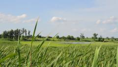 Green Fresh Grass Summer Field Nature Ecology Tourism Spring Crane Background HD Stock Footage