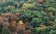 autumnal forest on a hill in prague - stock photo