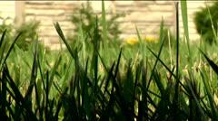 Grass 01-pond 5 720 Stock Footage