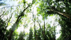 Vegetation and tropical green rainforest, Hawaii, USA Stock Footage