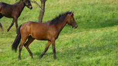 Two Horses 4 Stock Footage