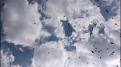 Bees in flight Stock Footage