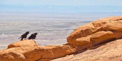 Two crows at arches national park, ut Stock Photos
