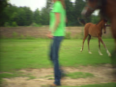 Foal Following Its Mother Through a Gate Stock Footage