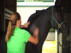 Stock Video Footage of Horse Being Brushed 2