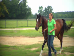 Horse Being Lead Through Gate Stock Footage