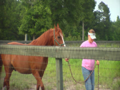 Horse Being Led into a Pasture Stock Footage