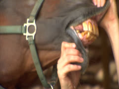 Horse Licking its Teeth Stock Footage