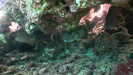Stock Video Footage of Colorful Fish on Vibrant Coral Reef
