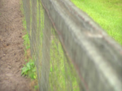 Horses Grazing by a Fence Stock Footage