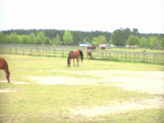 Horses Grazing in a Pasture Stock Footage