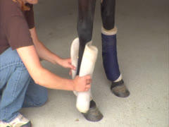 Person Dressing a Horse Leg with Bandage Stock Footage