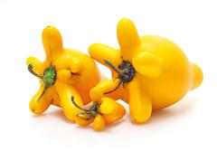 solanum mammosum plant, representing lucky symbols in chinese new year, isola - stock photo