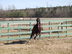 Stallion Prancing in Slow-Motion 6 Stock Footage