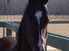 Stallion Spinning in Slow-Motion 2 Stock Footage