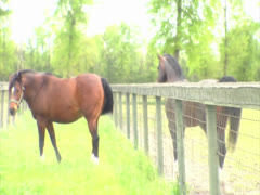 Three Horses Seperated By a Fence Stock Footage
