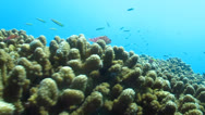 Stock Video Footage of shots from the reef of Cabo Pulmo National Park, World Heritage site. Mexico.