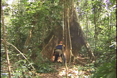 Tree cutting in the Amazon - stock footage