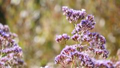 Green Bushes to Purple Wildflower Rack Focus Stock Footage