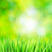 Green grass background with sunny bokeh Stock Photos