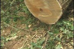 Tree cutting in the Amazon Stock Footage