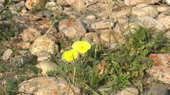 Flower, Nature Baikal - stock footage