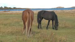 wild horses - stock footage