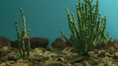 Baikal Limnological Museum - stock footage