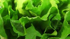 Lettuce leaf - dolly shot Stock Footage