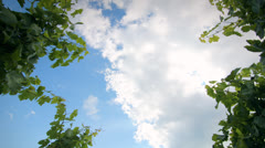 Time lapse of clouds over a Vineyard - Nature Stock Footage