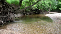 Peaceful stream Stock Footage
