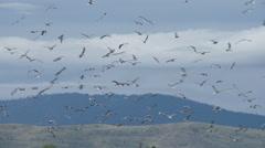 Seagulls Arkistovideo