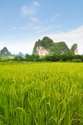 rice fields and karst mountains in southern china - stock photo