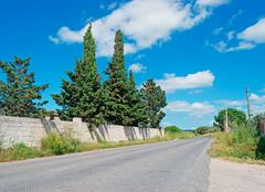 Cypresses by the road Stock Photos