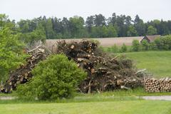 firewood pile in rural ambiance - stock photo