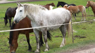 Herd of horses of various colors Stock Footage